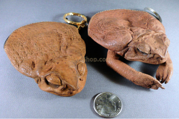 Cane Toad Leather Coin Purse