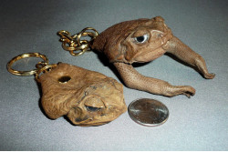 Cane Toad Head Key Ring