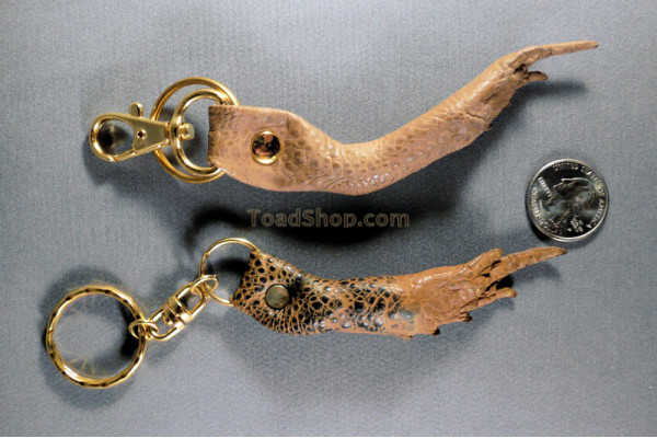 Cane Toad Leg Key Ring