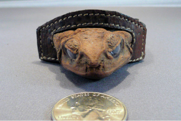 Cane Toad Hat Band