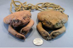 Cane Toad Shoulder Purse
