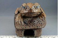 Cane Toad Golf Ball Case