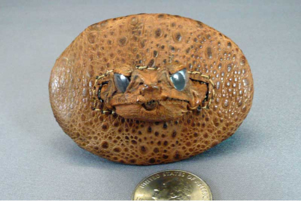 Cane Toad Belt Buckle