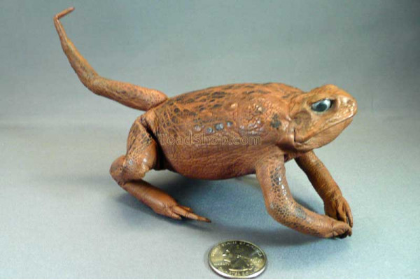"""Prehistoric"" Stuffed Cane Toad with Tail"
