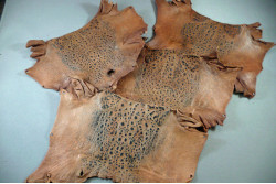 Cane Toad Skins