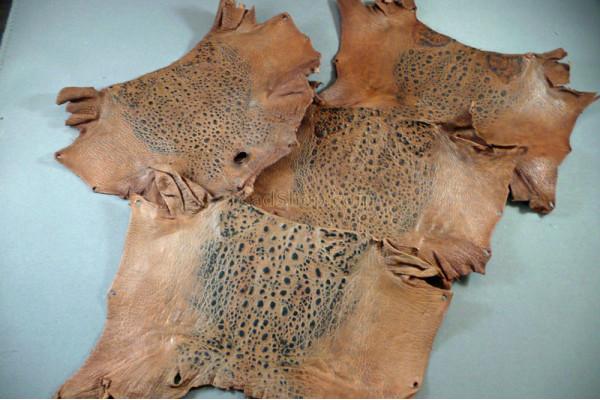 Cane Toad Skins
